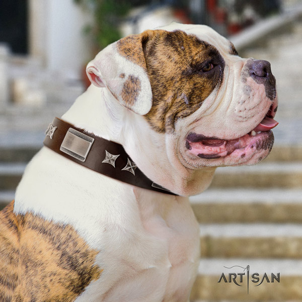 American Bulldog fashionable full grain leather dog collar with studs for everyday walking