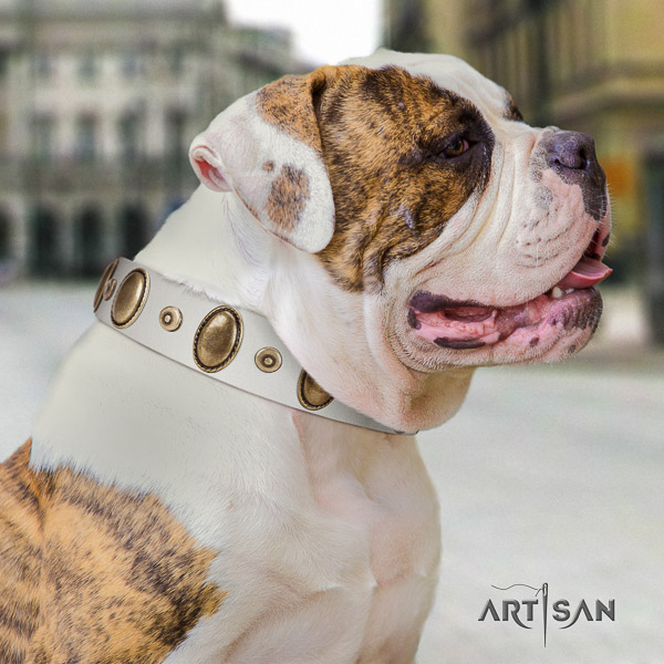 American Bulldog significant genuine leather dog collar for everyday walking