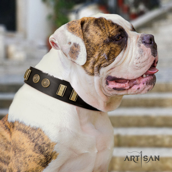 American Bulldog remarkable genuine leather dog collar with adornments for comfy wearing