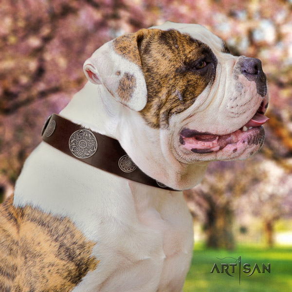 American Bulldog studded natural genuine leather dog collar for comfy wearing