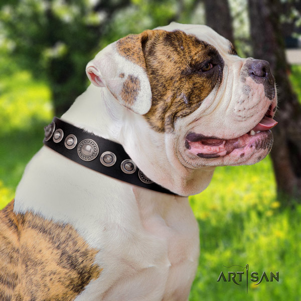 American Bulldog stylish design genuine leather dog collar with studs for everyday use