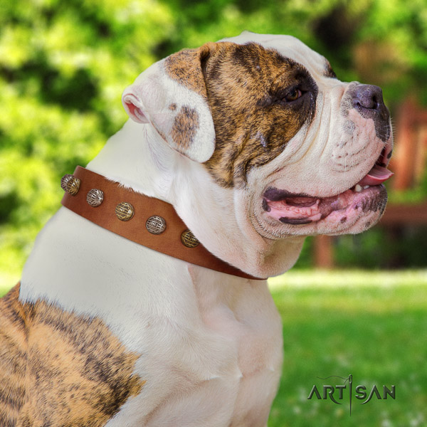 American Bulldog handcrafted leather dog collar for stylish walking