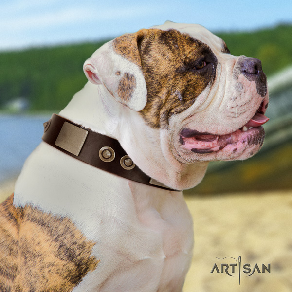 American Bulldog daily use full grain leather collar with trendy decorations for your canine