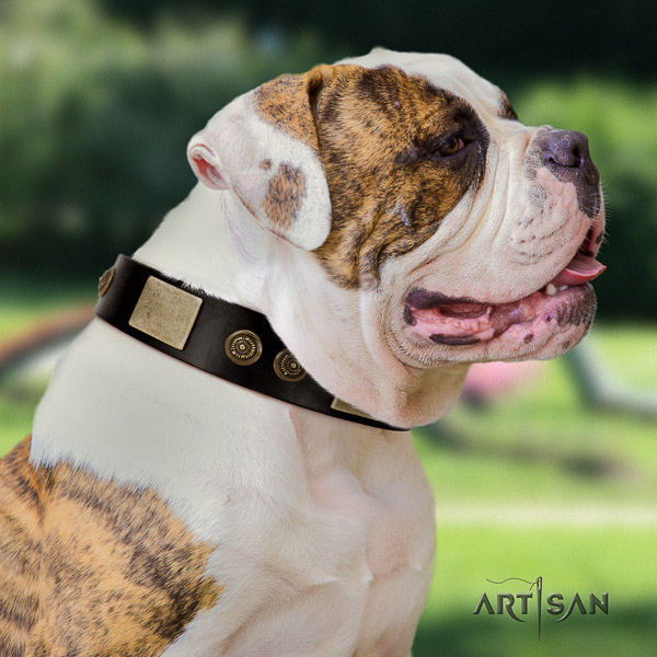 American Bulldog daily walking leather collar with unique decorations for your pet