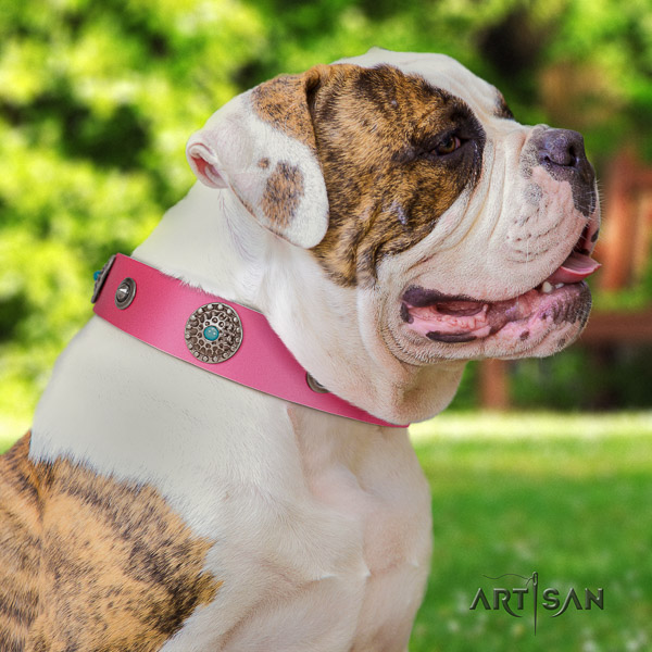 American Bulldog trendy genuine leather dog collar for comfy wearing