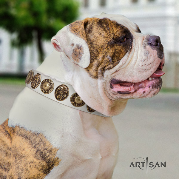 American Bulldog stylish walking natural leather collar with amazing studs for your canine