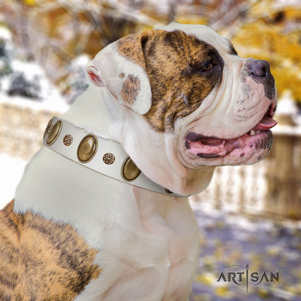American Bulldog embellished full grain leather dog collar for stylish walking