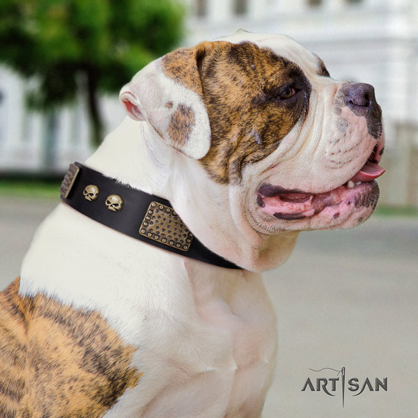 American Bulldog designer full grain leather dog collar with decorations for daily walking