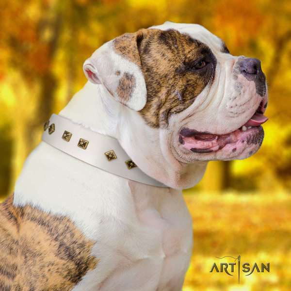 American Bulldog designer leather dog collar with embellishments for everyday use