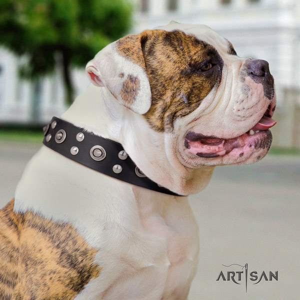 American Bulldog designer full grain leather dog collar with adornments for walking
