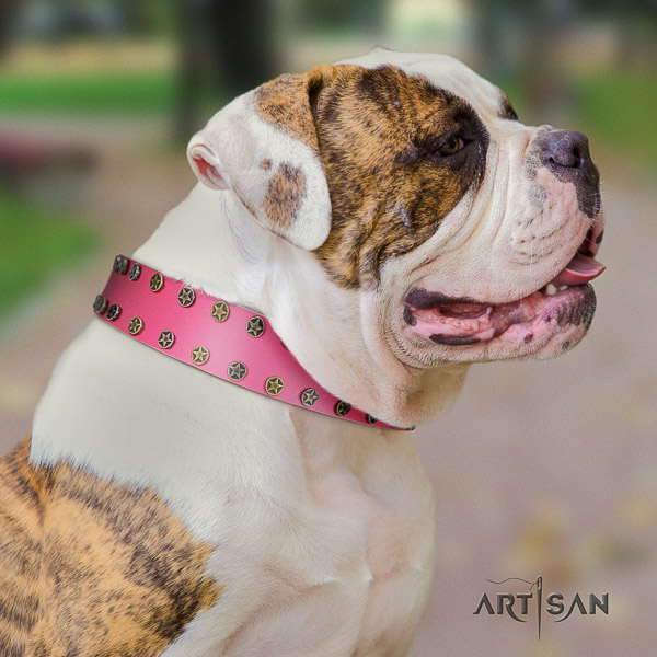American Bulldog fine quality natural genuine leather dog collar for everyday walking
