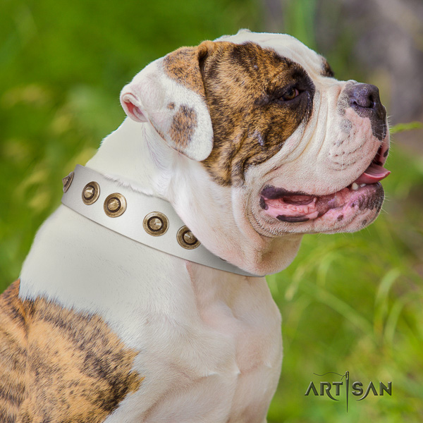American Bulldog daily walking genuine leather collar with fashionable embellishments for your dog