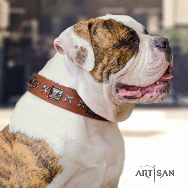 American Bulldog stunning leather dog collar with adornments for easy wearing