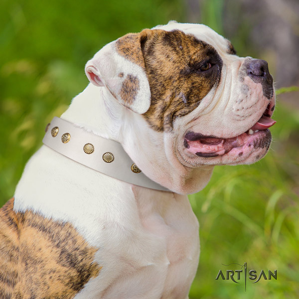 American Bulldog awesome leather dog collar with decorations for comfy wearing