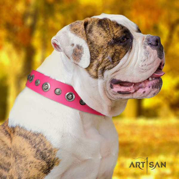 American Bulldog significant leather dog collar with decorations for comfortable wearing