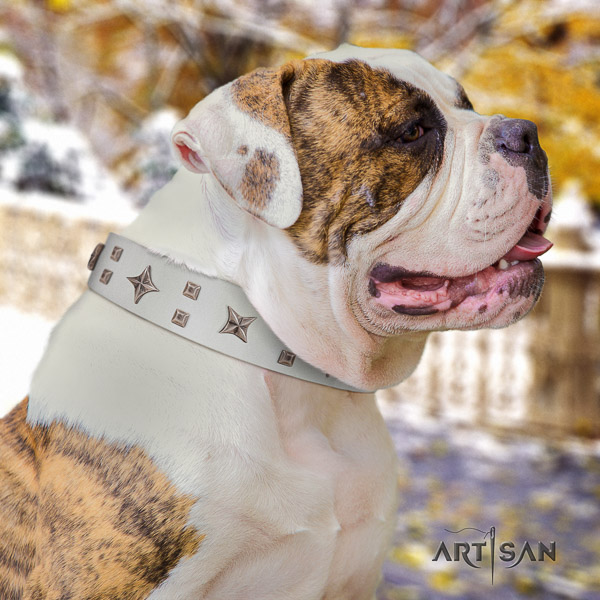 American Bulldog comfortable natural genuine leather dog collar for everyday walking