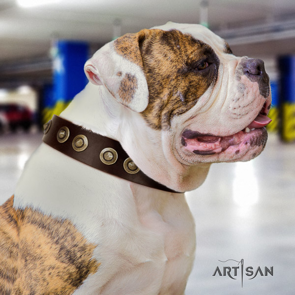 American Bulldog stylish walking full grain leather collar with inimitable studs for your doggie