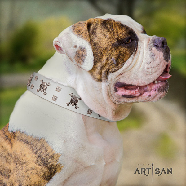 American Bulldog convenient leather dog collar for everyday use