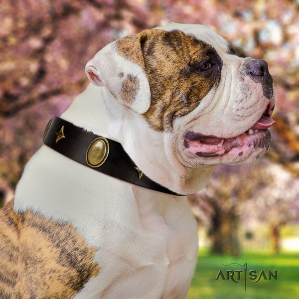 American Bulldog best quality full grain leather dog collar for easy wearing