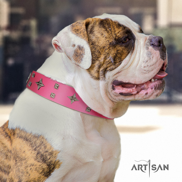 American Bulldog adorned genuine leather dog collar for everyday walking