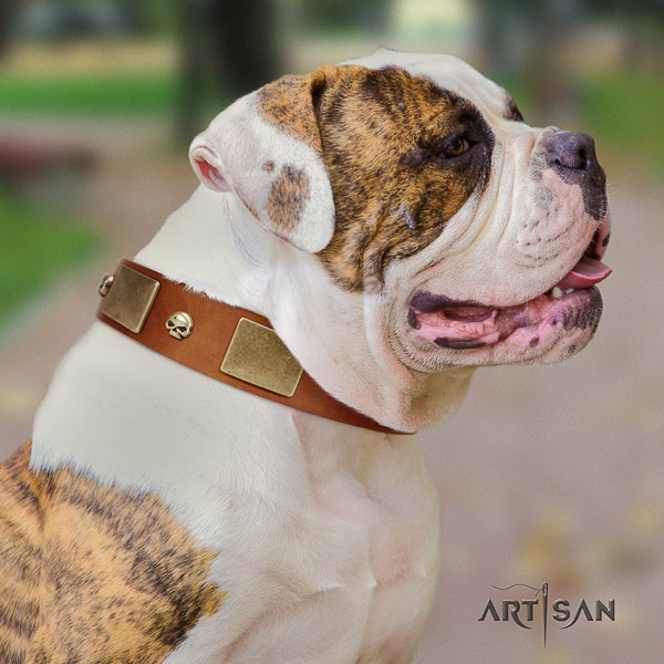 American Bulldog remarkable genuine leather dog collar for everyday use