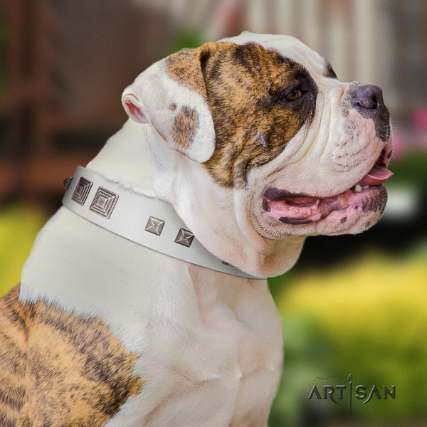 American Bulldog impressive full grain natural leather dog collar for stylish walking