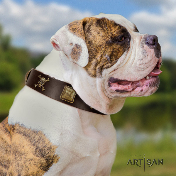 American Bulldog easy wearing genuine leather dog collar for everyday use