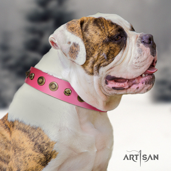 American Bulldog fine quality full grain genuine leather dog collar for everyday use