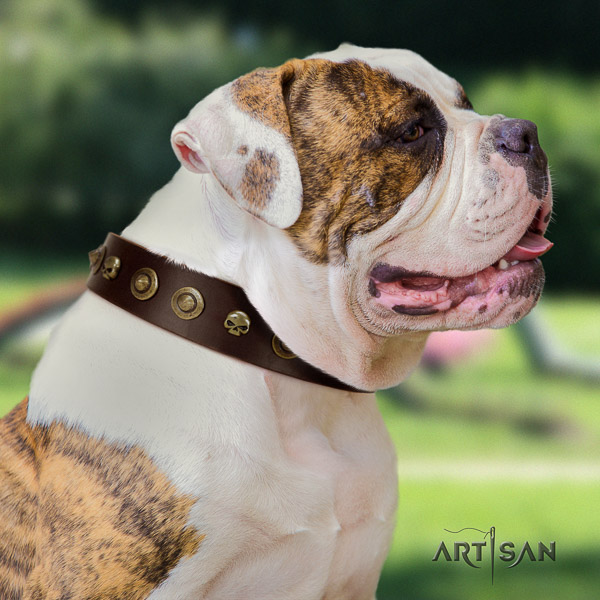American Bulldog unique full grain leather dog collar for stylish walking