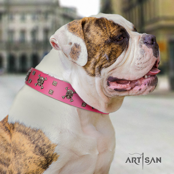 American Bulldog extraordinary full grain leather dog collar for walking