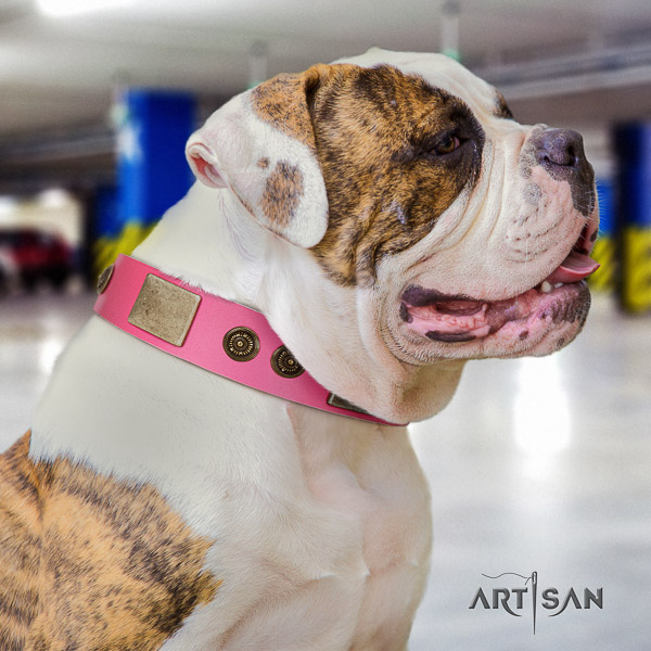 American Bulldog daily use genuine leather collar with stunning decorations for your four-legged friend