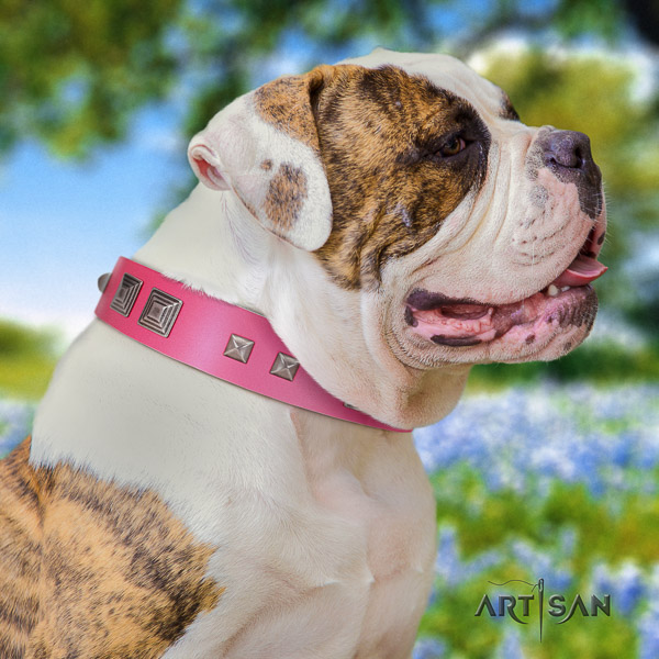 American Bulldog designer leather dog collar for easy wearing