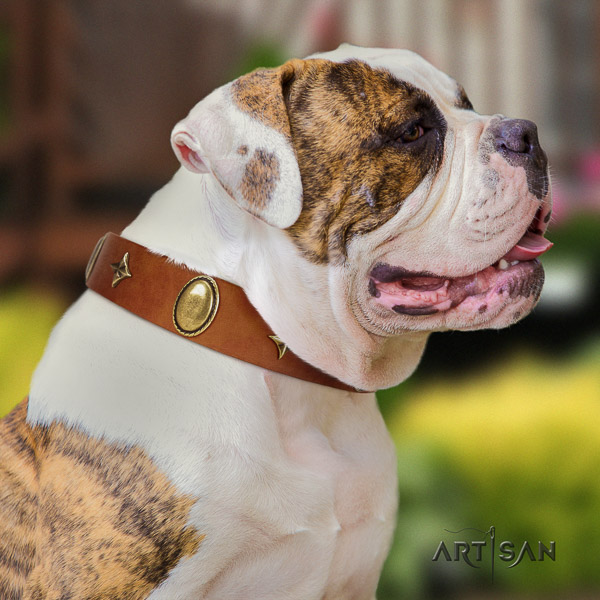 American Bulldog exquisite genuine leather dog collar for daily use
