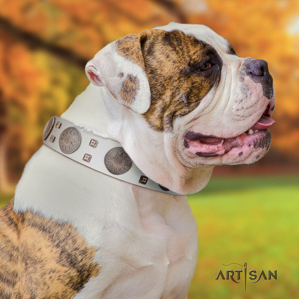 American Bulldog fashionable leather dog collar for everyday walking