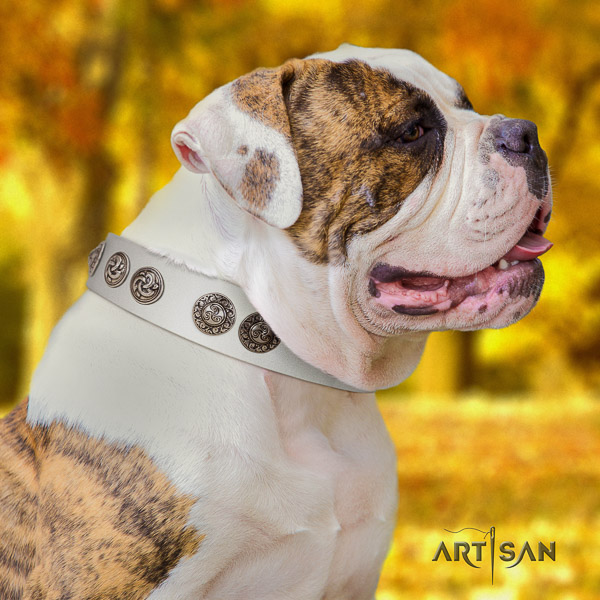 American Bulldog stylish design leather dog collar for everyday walking