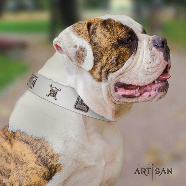 American Bulldog adjustable genuine leather dog collar for easy wearing