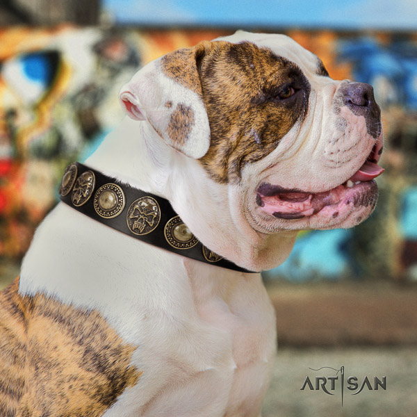 American Bulldog walking natural leather collar with unusual studs for your canine