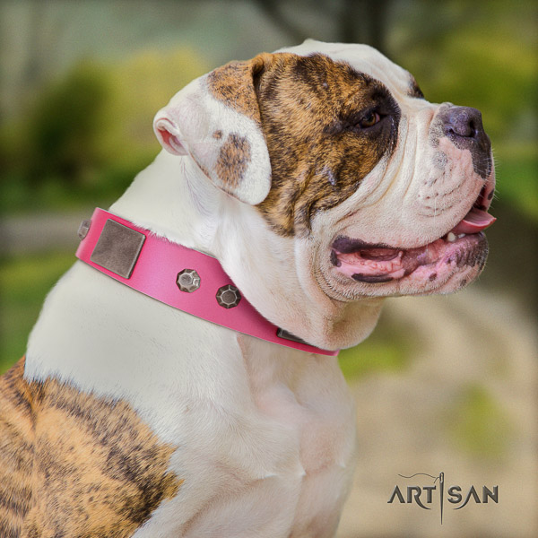 American Bulldog top notch full grain leather dog collar for comfy wearing