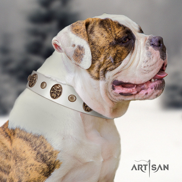 American Bulldog comfy wearing natural leather collar with remarkable decorations for your doggie