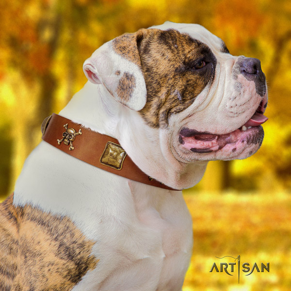 American Bulldog incredible full grain genuine leather dog collar for basic training