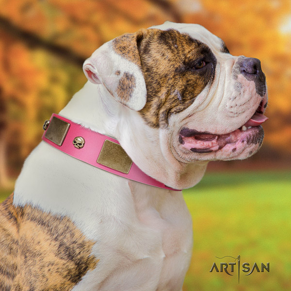 American Bulldog awesome genuine leather dog collar for comfortable wearing