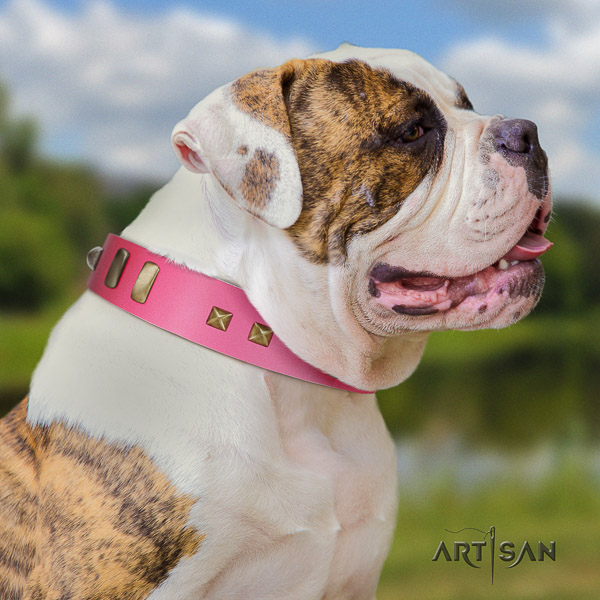 American Bulldog exceptional full grain genuine leather dog collar for walking