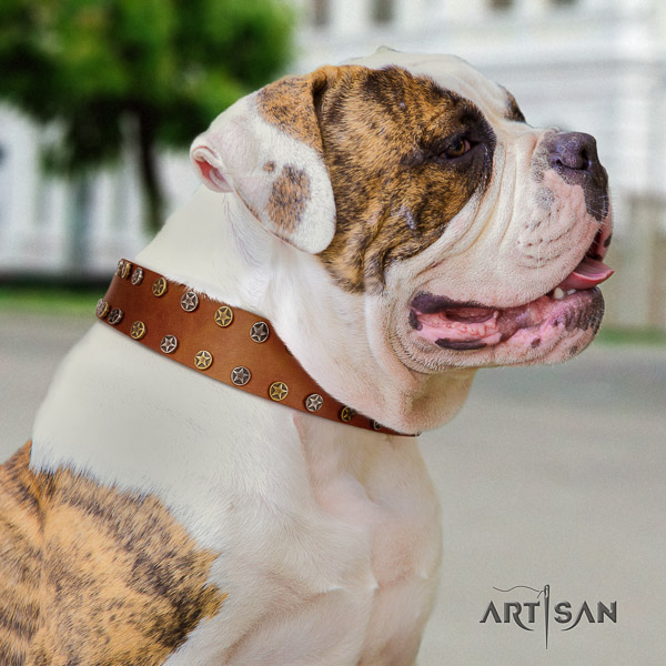 American Bulldog unique genuine leather dog collar for everyday use