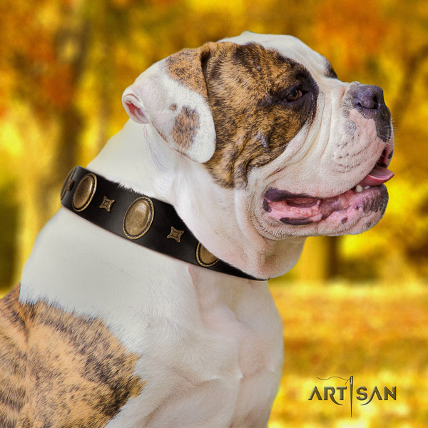 American Bulldog stunning full grain genuine leather dog collar for daily use