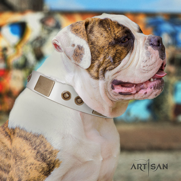 American Bulldog everyday walking natural leather collar with incredible adornments for your four-legged friend