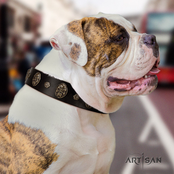 American Bulldog everyday use leather collar with incredible embellishments for your doggie