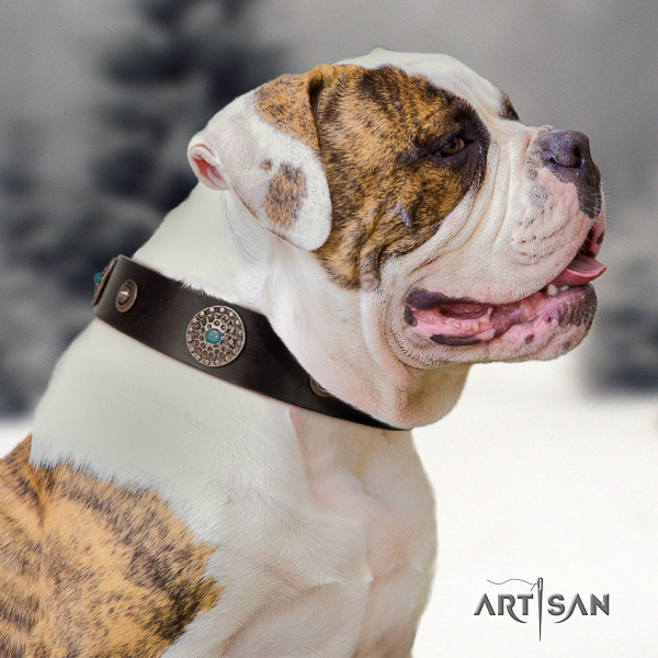 American Bulldog exceptional full grain genuine leather dog collar for daily use