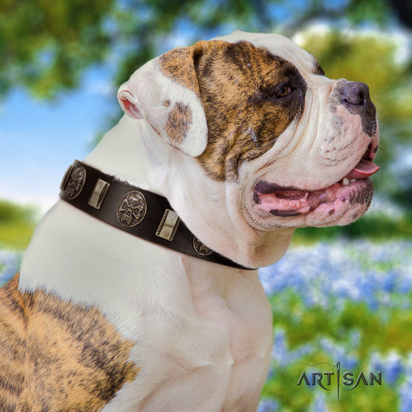 American Bulldog comfortable wearing full grain leather collar with fashionable studs for your pet