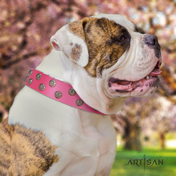 American Bulldog decorated natural genuine leather dog collar for daily walking