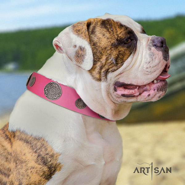 American Bulldog designer full grain leather dog collar for daily use